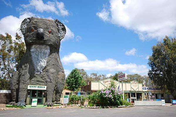 Giant Koala - Dadswell Bridge